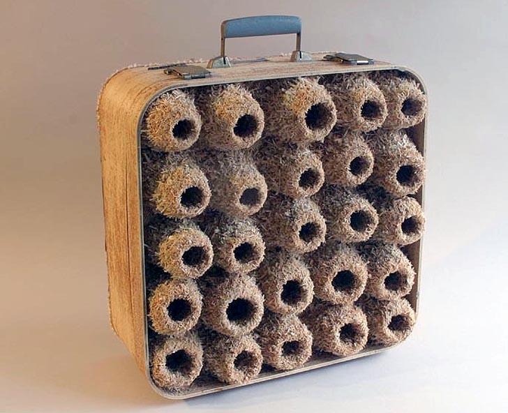 bavuldaki yuva kolonileri 5