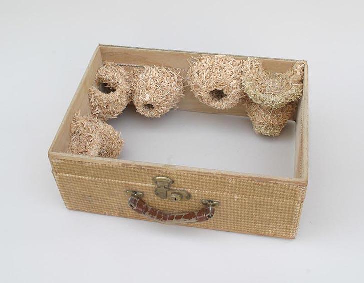 bavuldaki yuva kolonileri