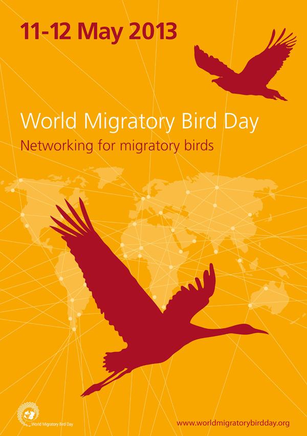 dünya göçmen kuşlar günü 2013